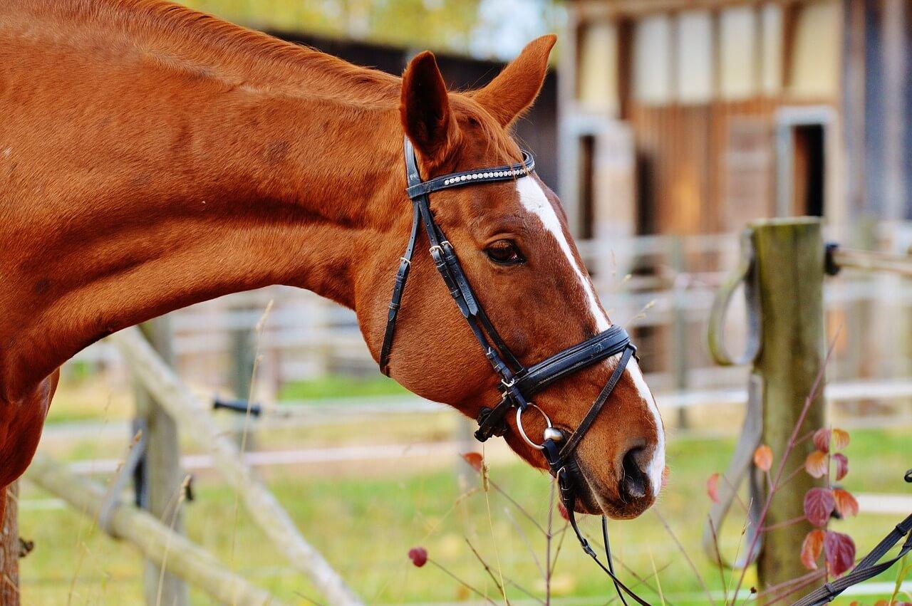 horse-1006565_1280