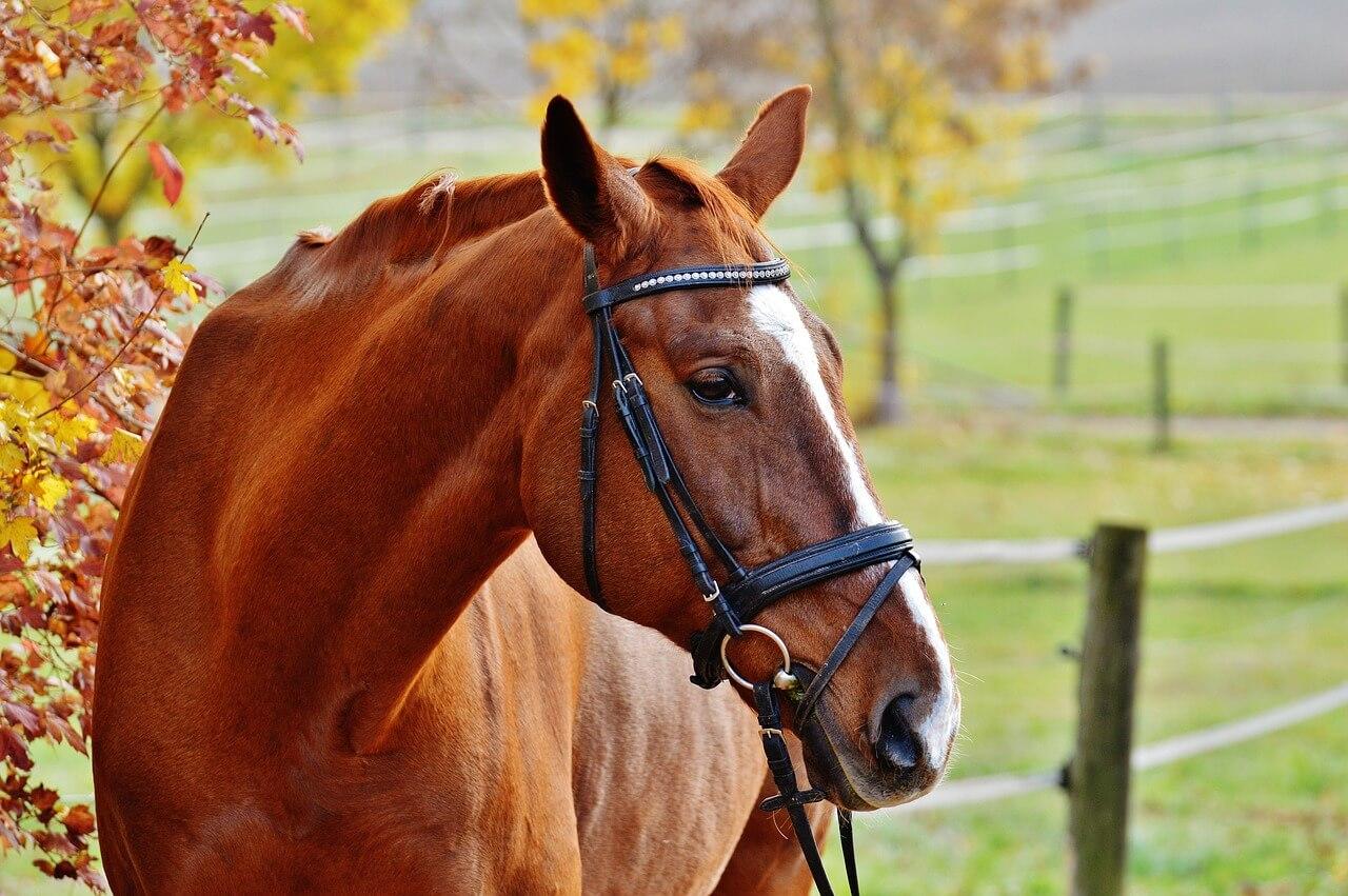 horse-1007216_1280