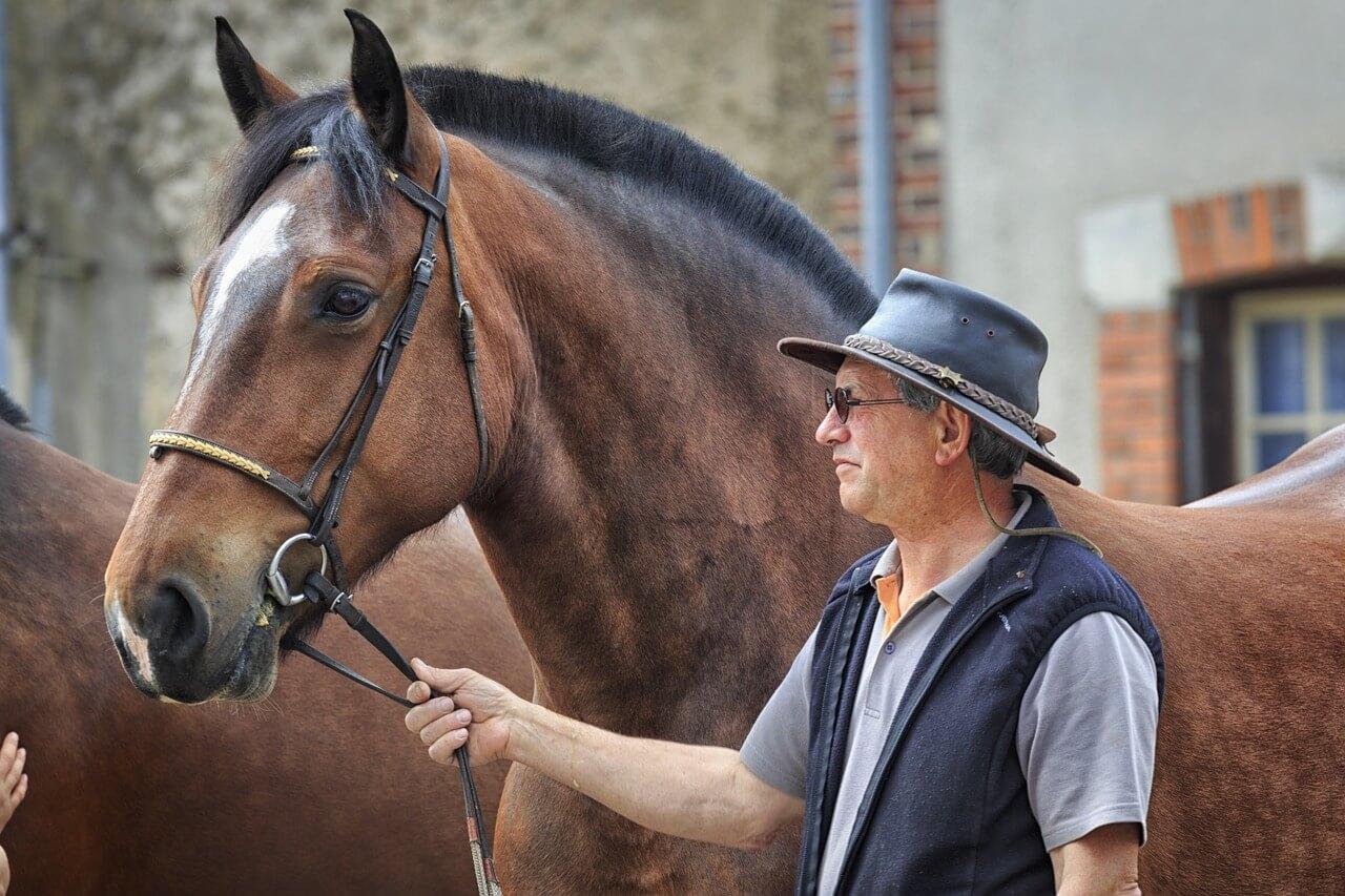 horse-1144061_1280