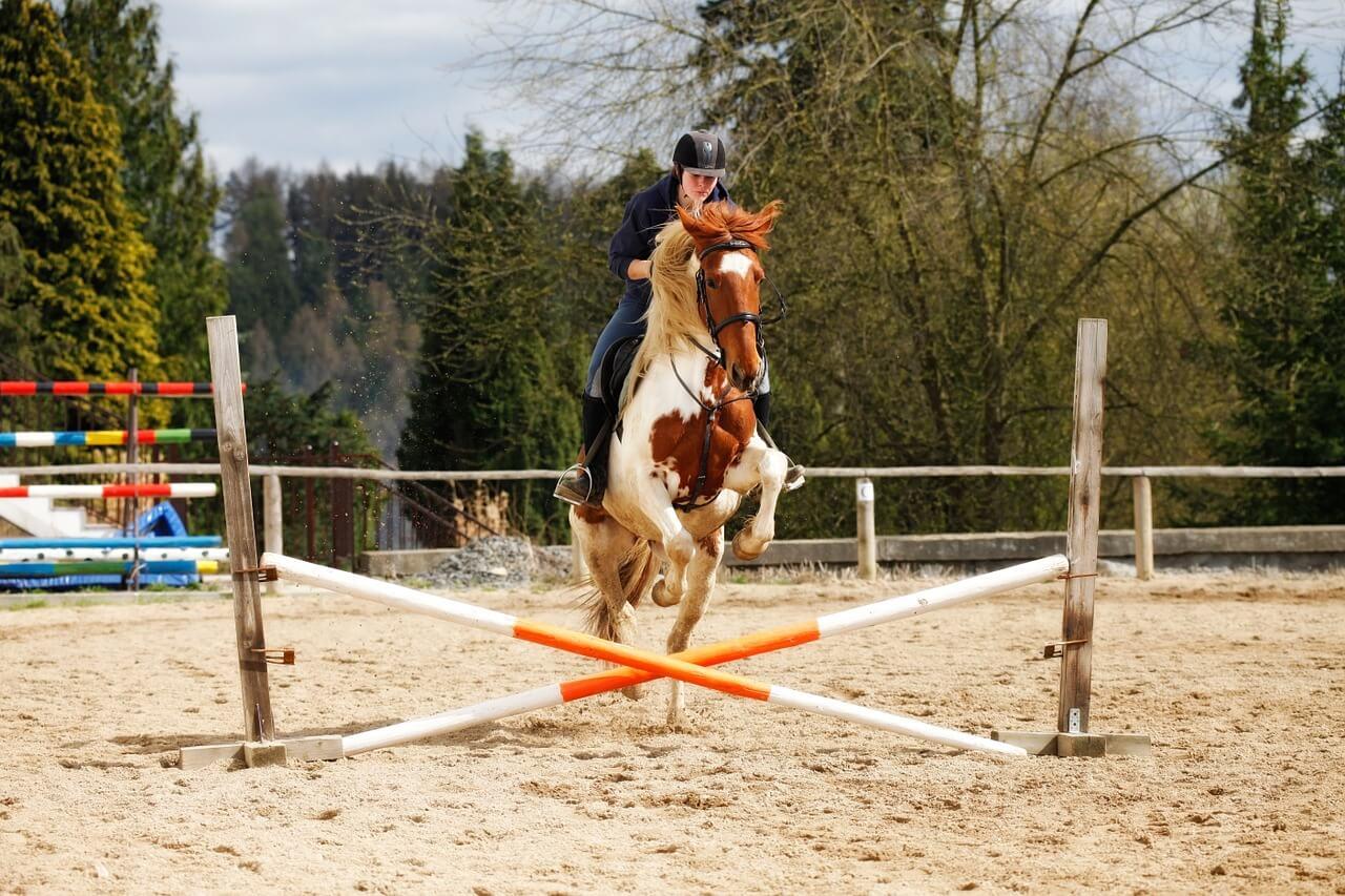 horse-1169871_1280