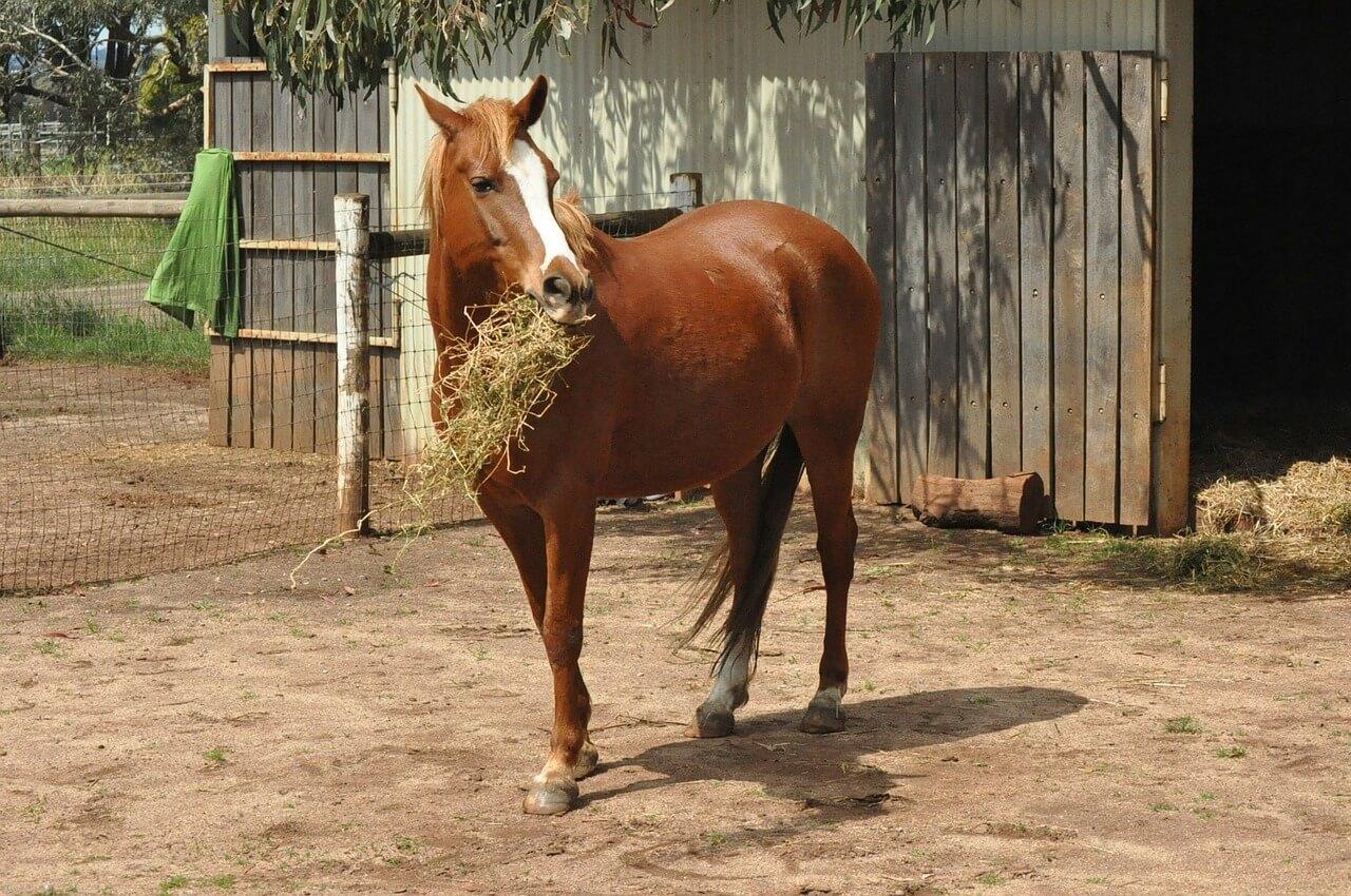 horse-164914_1280