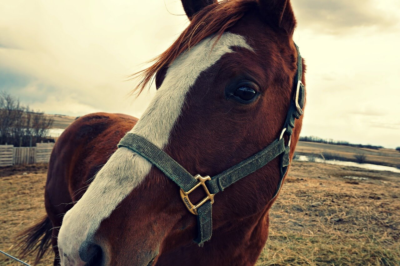 horse-801999_1280