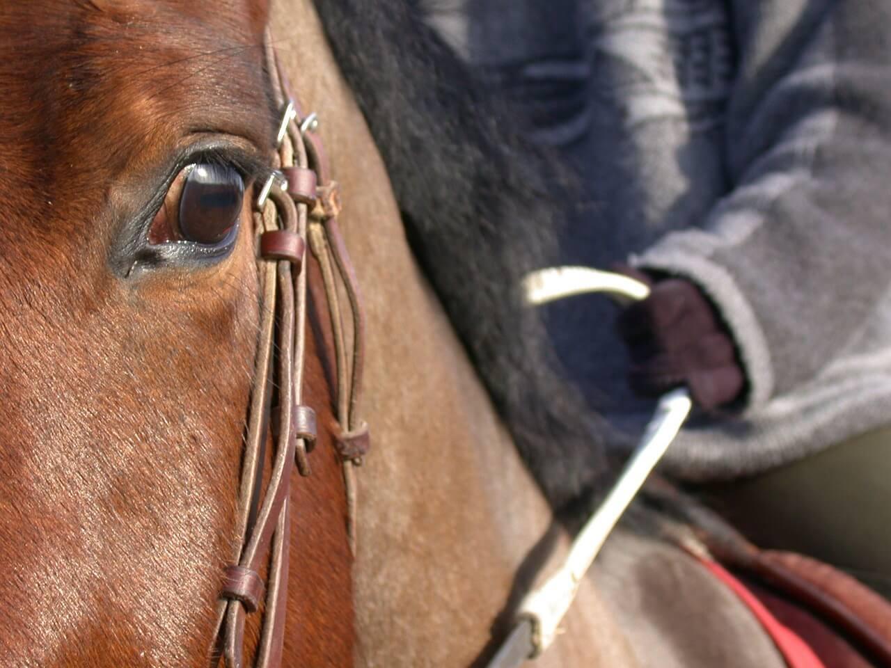 horse-91146_1280