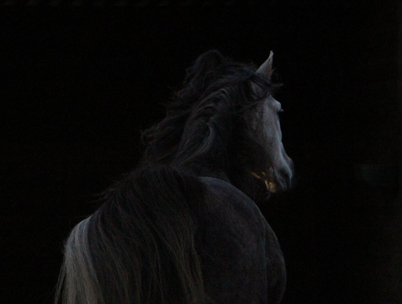 horse-943001_1280