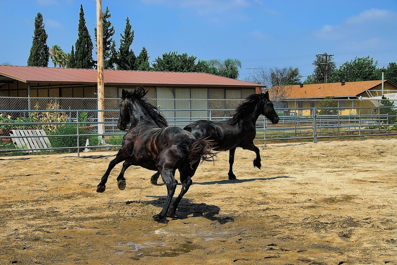 horses-1232830_1280