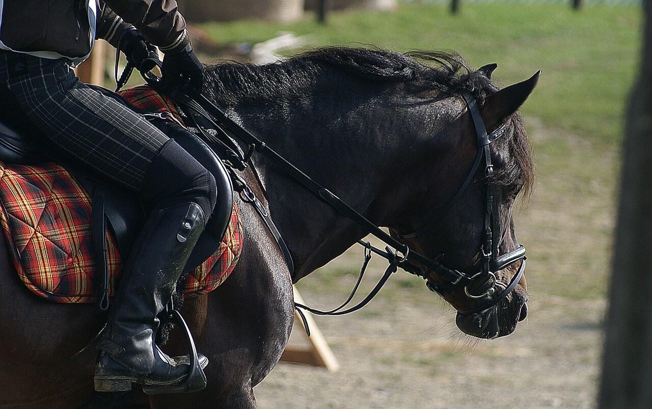 riding-454757_1280