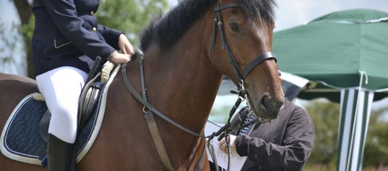 horse-965582_1280