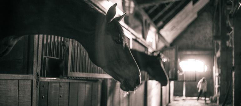 horses-786239_1280
