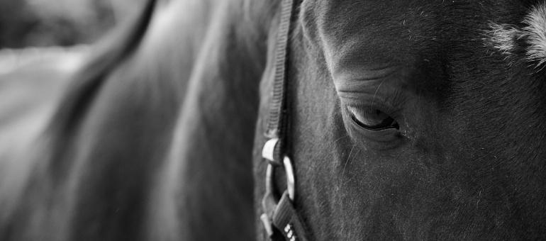 horse-1513160_1280