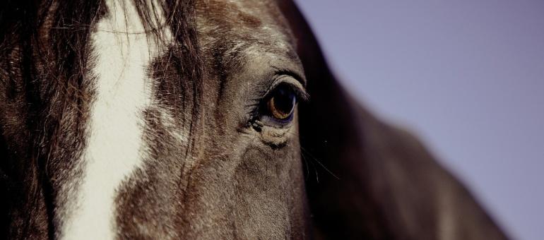 horse-594191_1280